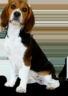 Home · About Us · Bedbug Treatments · Bedbug Dogs ...